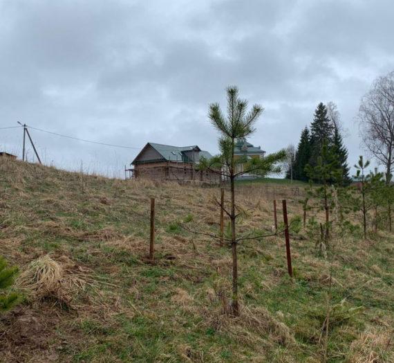 Озеленение территории Ольгинского монастыря.
